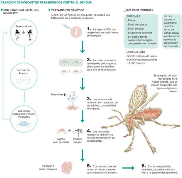 mosquitos-modificados