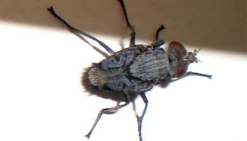cauze de semne de picioare varicoase cicoralii sunt utili în varicoză