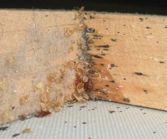 Foto 4. Imagen de una esquina inferior del marco./ Desinsectador 18-12-2012