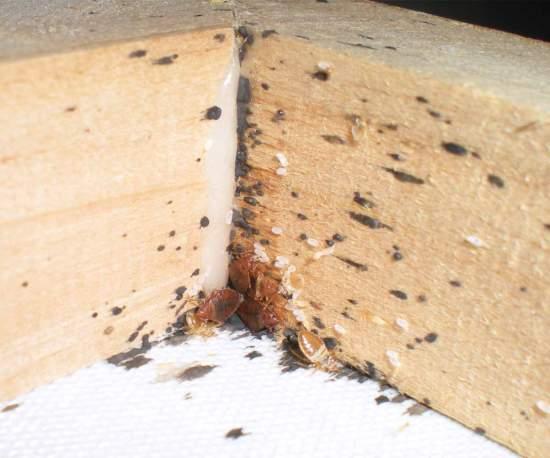 Foto 1. Imagen de una esquina superior del marco/ Desinsectador 18-12-2012
