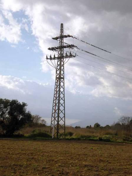 Foto 8. Estorninos pintos en las afueras de Rosas sobre una torre eléctrica./ Desinsectador 17-12-2012