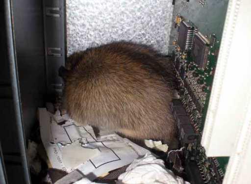 Foto 3. Imagen del interior de la centralita telefónica./ Desinsectador 07-01-2013