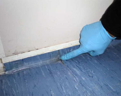 Foto 3. Extendiendo la laca insecticida./ Desinsectador 30-05-2013