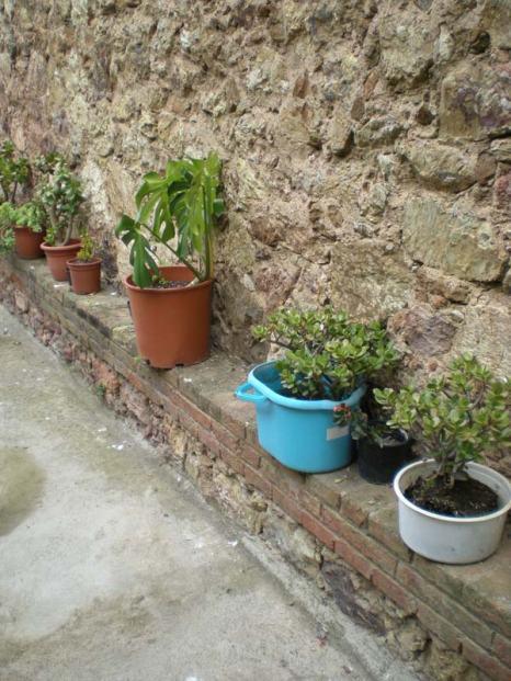 Foto 1. Imagen de un patio trasero con plantas./ Desinsectador junio-2013