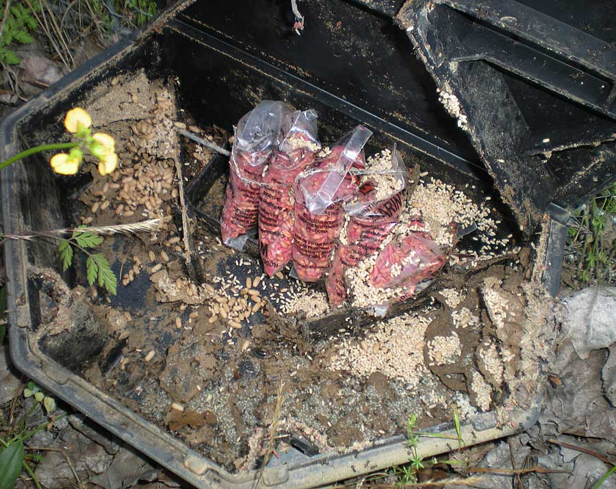 Hormiga de jard n lasius grandis el desinsectador y for Hormigas en el jardin
