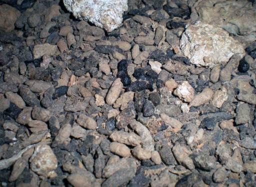 Foto 4. Detalle del suelo lleno de excrementos de rata./ Desinsectador 09-07-2013