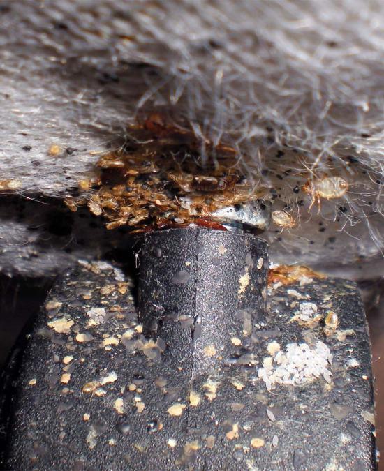 Foto 3. Imagen de una pata de una de las camas tratadas hoy./ Desinsectador 10-2013