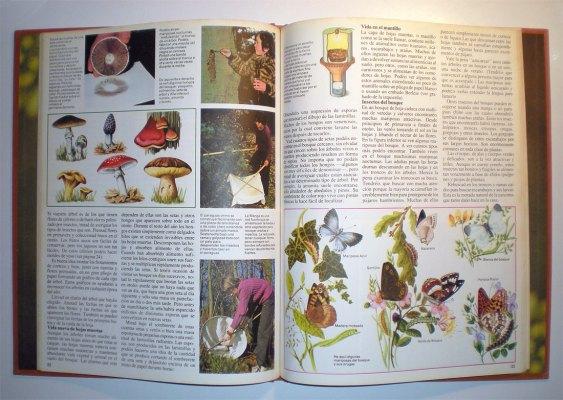 Foto 3. Interior del libro. Páginas 32 y 33./ Desinsectador 11-2013