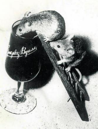 Foto 2. Ratones bodegueros./