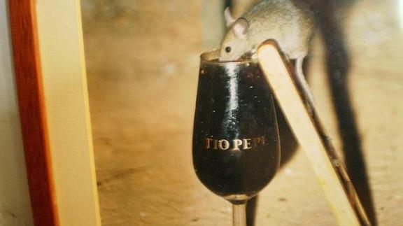 Ratón bebiendo vino en una bodega de Jerez./ ABC