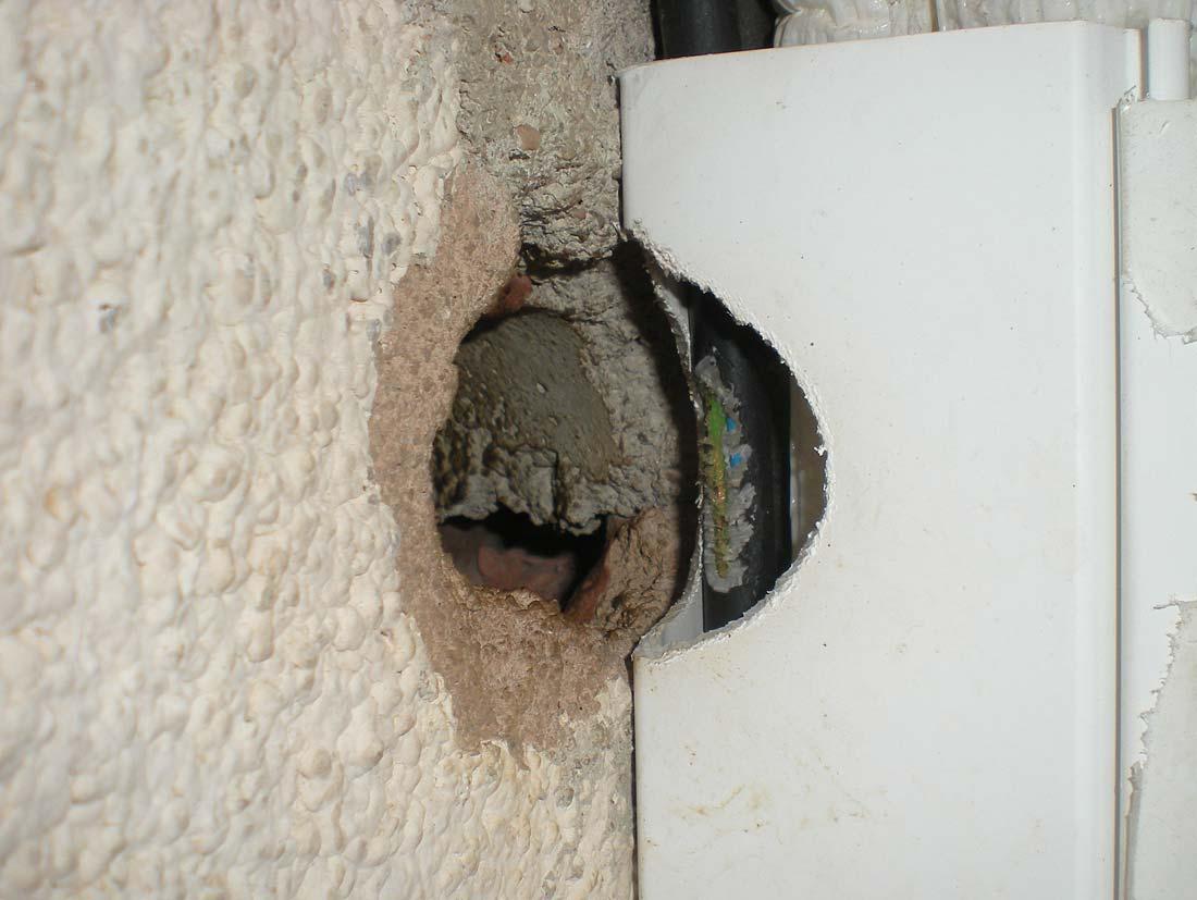 Cableado ro do por m ridos el desinsectador y desratizador - Agujero en la pared ...