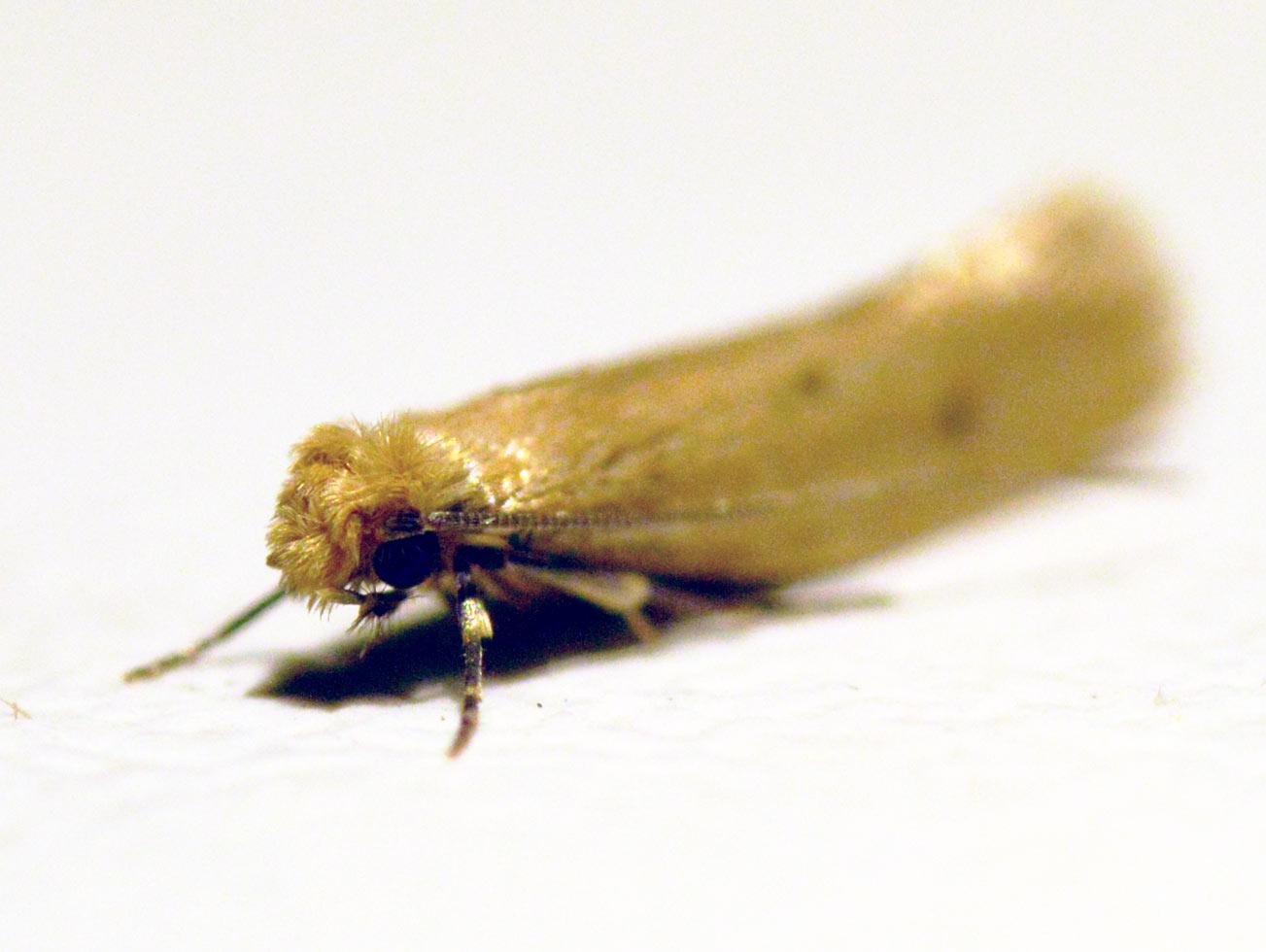Eliminar Polillas En Casa Imagen Titulada Get Rid Of Pantry Moths  ~ Como Eliminar Las Polillas De Casa