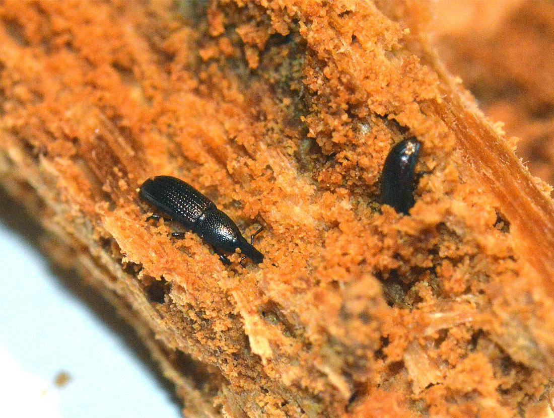 Insectos y escarabajos