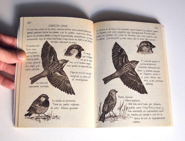 aves-urbanas-diaz-diez-1985-03
