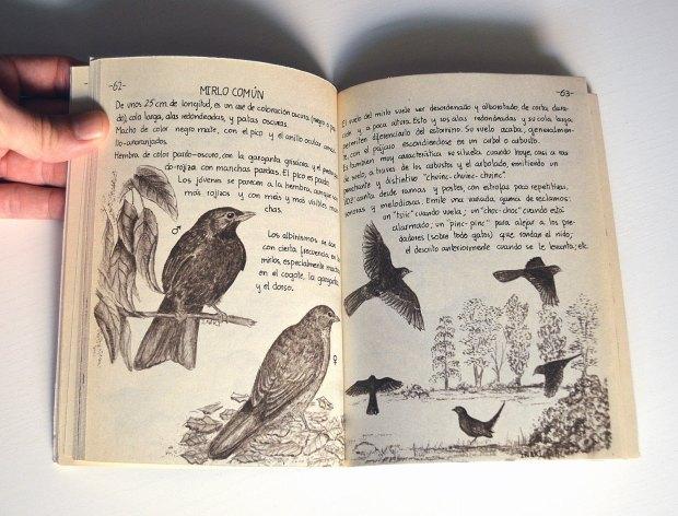 aves-urbanas-diaz-diez-1985-04