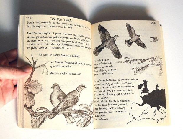 aves-urbanas-diaz-diez-1985-06