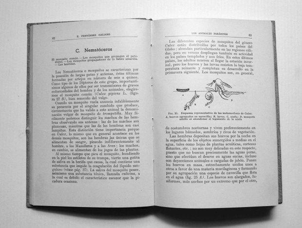 parasitos-emilio-fernandez-galiano-1943-pp62-63