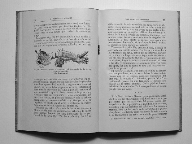 parasitos-emilio-fernandez-galiano-1943-pp64-65