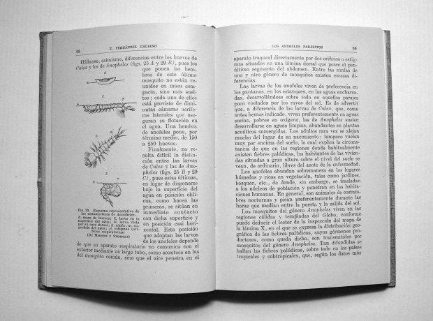 parasitos-emilio-fernandez-galiano-1943-pp68-69