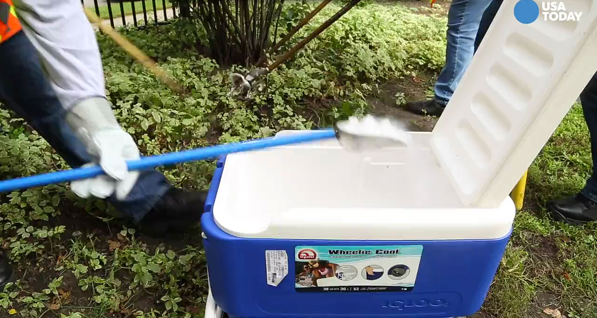US EPA a las grandes ciudades: paren de matar ratas con hielo seco ...