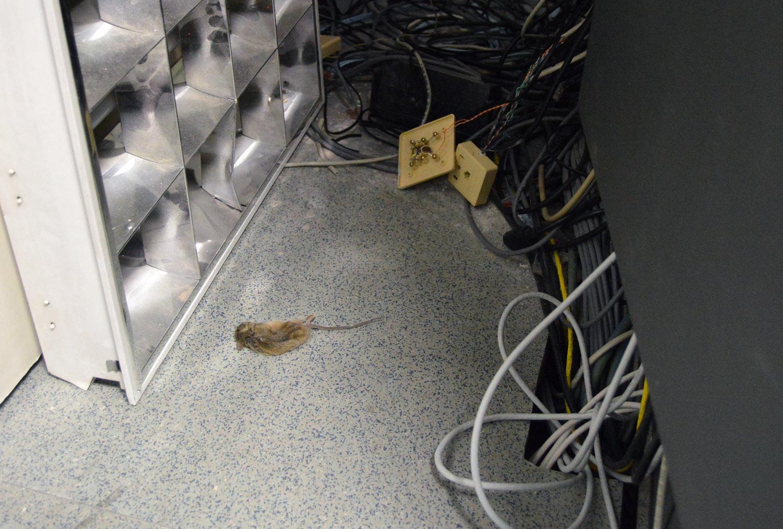 Dónde buscar ratones dentro de su casa